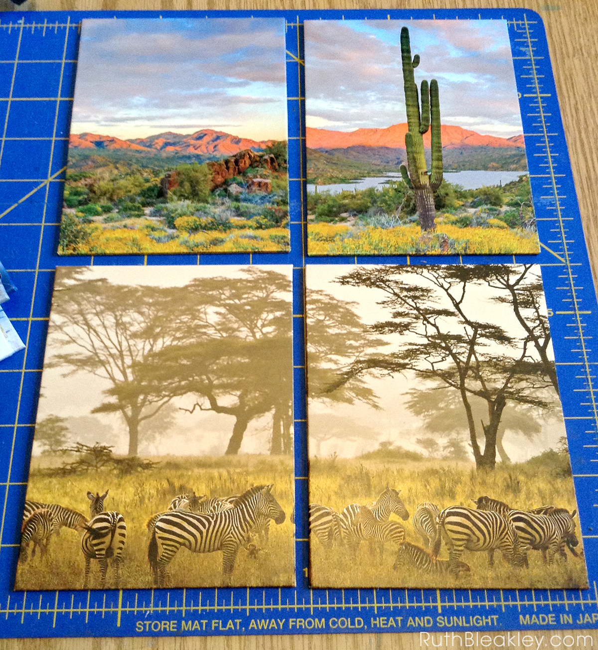 Desert and Savannah book covers made by bookbinder Ruth Bleakley